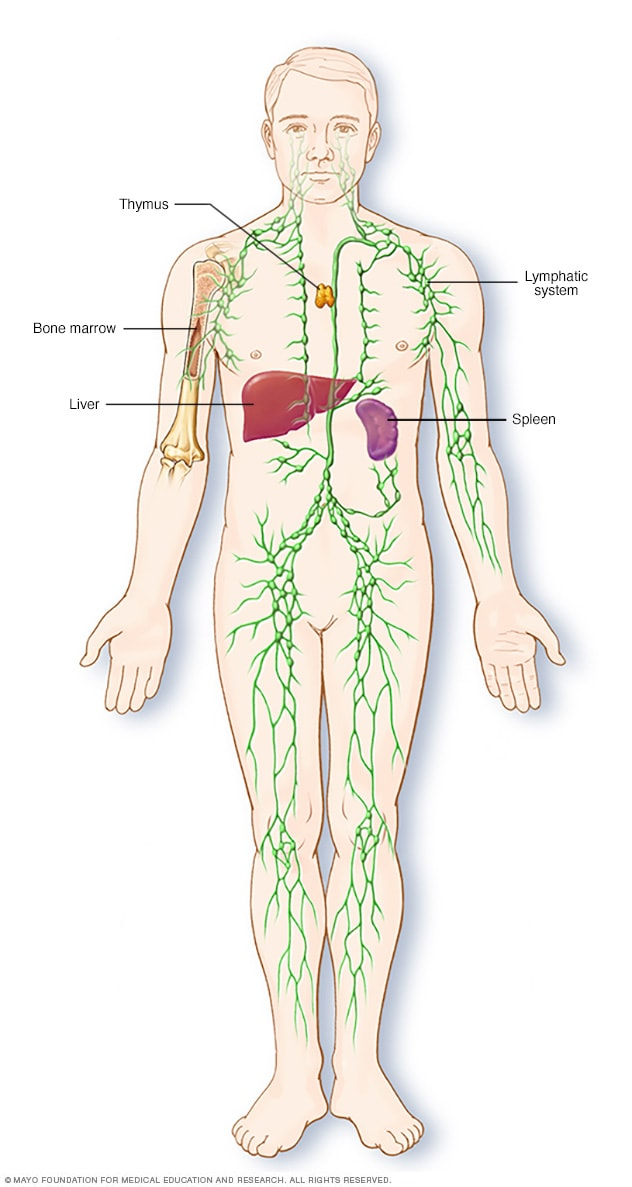Lymphoma symptoms and causes mayo clinic overview lymphatic system ccuart Images