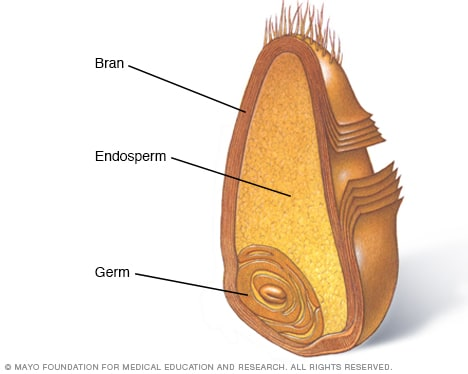 Cross section of whole grain showing bran, endosperm and germ