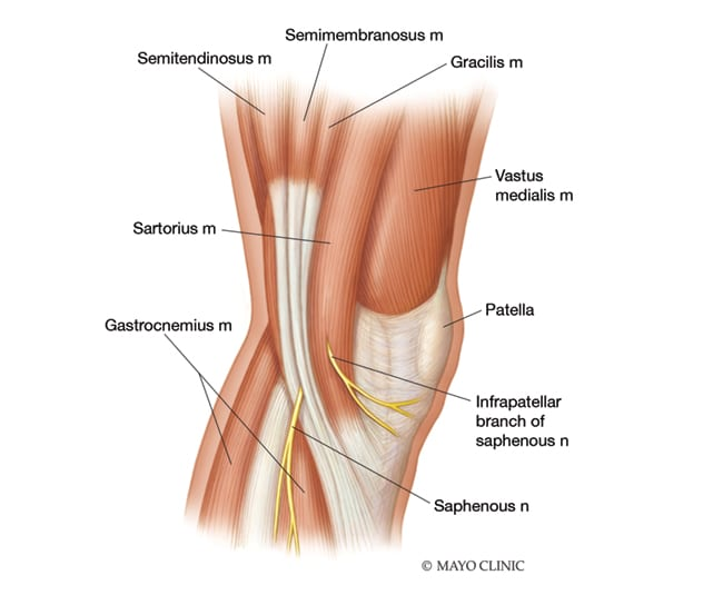 Infrapatellar branch of the saphenous nerve