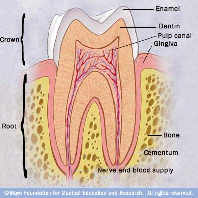Illustration showing healthy tooth
