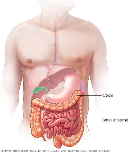 Illustration showing small intestine