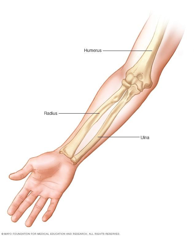 Huesos del brazo - Mayo Clinic