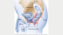 Muscles targeted during male Kegel exercises