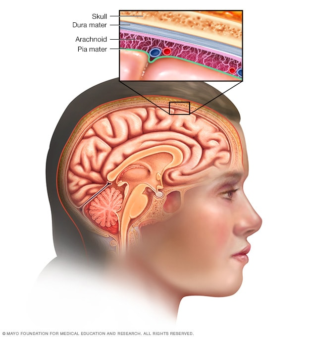 Illustration showing meninges