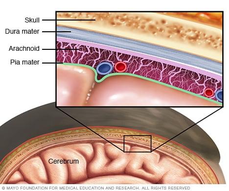 meningitis symptoms and causes - mayo clinic, Cephalic Vein