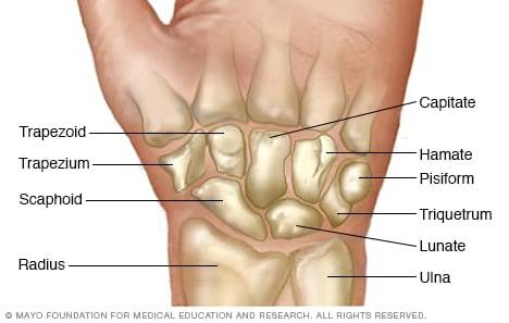 Huesos de la muñeca - Mayo Clinic