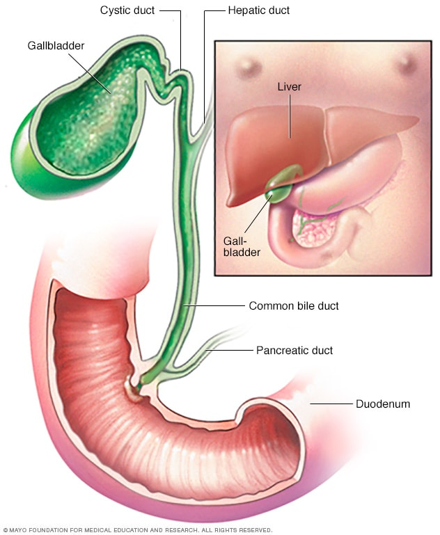 Gallbladder And Bile Duct Mayo Clinic