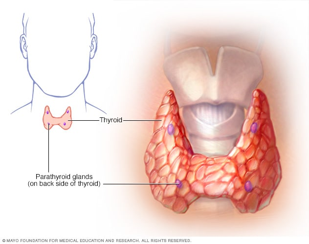Glándulas paratiroides - Mayo Clinic
