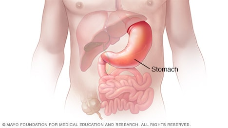 Illustration of stomach