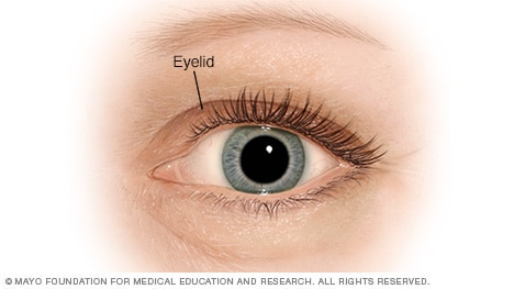 Illustration of the eyelid