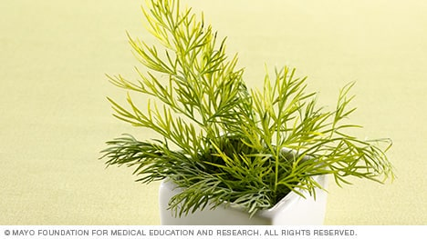 Photograph of fresh dill