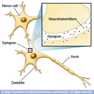 Illustration of how nerves communicate