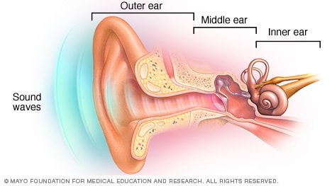 Illustration showing the outer ear, middle ear and inner ear