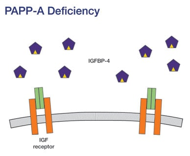 Image of IGF signaling reduced when PAPP-A is absent