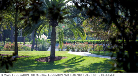 Garden and path at Mayo Clinic's campus in Florida