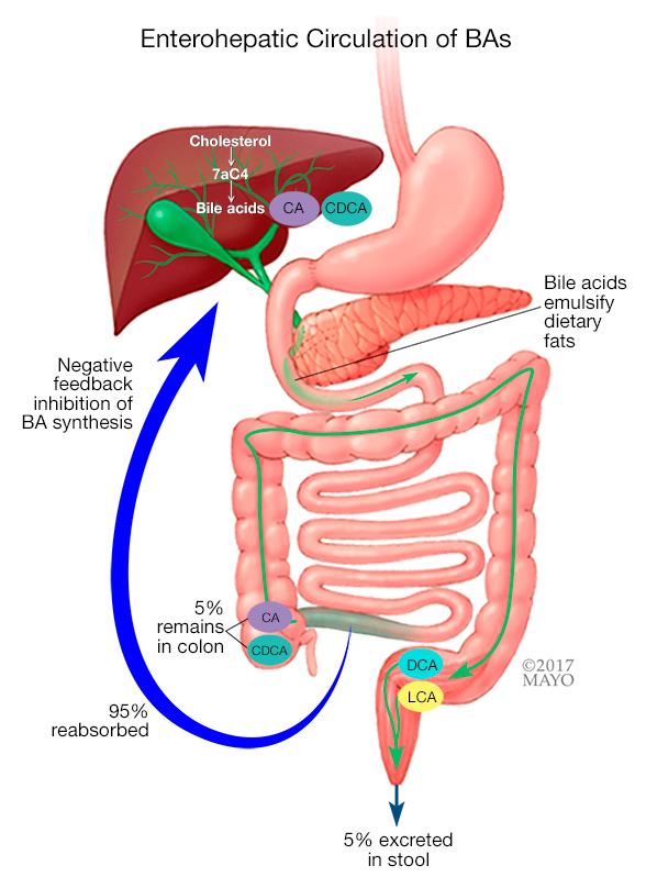 Identifying diarrhea caused by bile acid malabsorption - Mayo Clinic