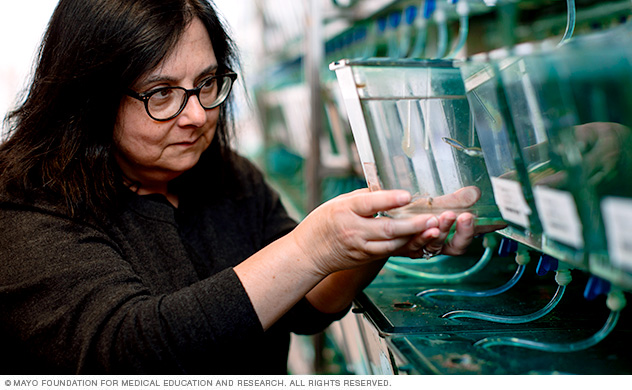 A pediatric geneticist uses zebrafish to study hearing and genetics