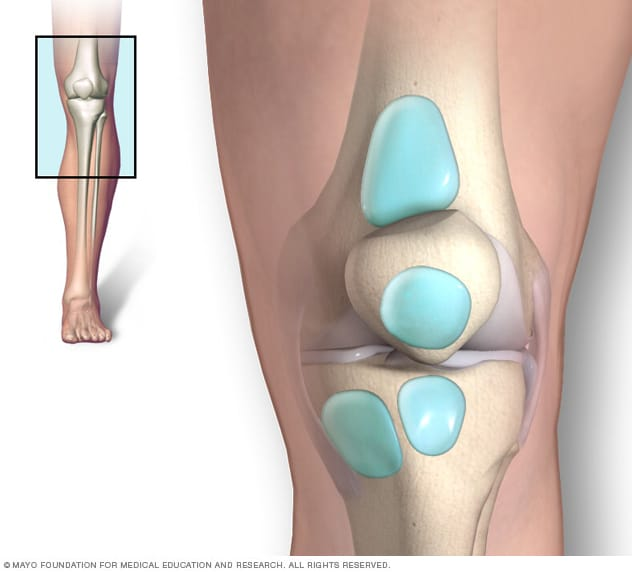 Illustration showing knee bursae