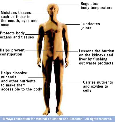 Functions of water in the body