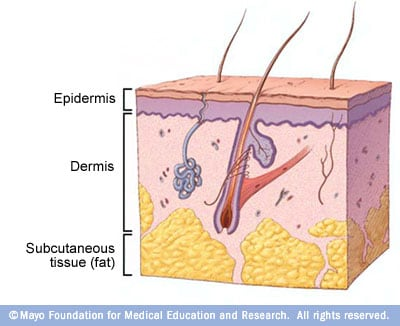 Illustration showing basic skin layers