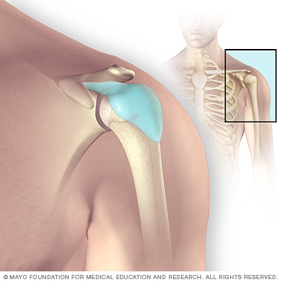 Illustration showing shoulder bursae