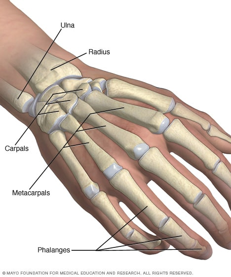 Illustration showing hand and wrist bones