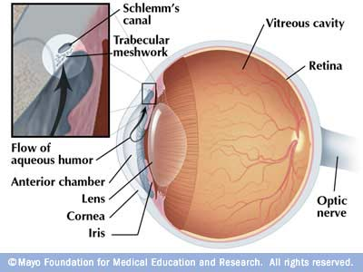 Illustration showing movement of fluid in the eye