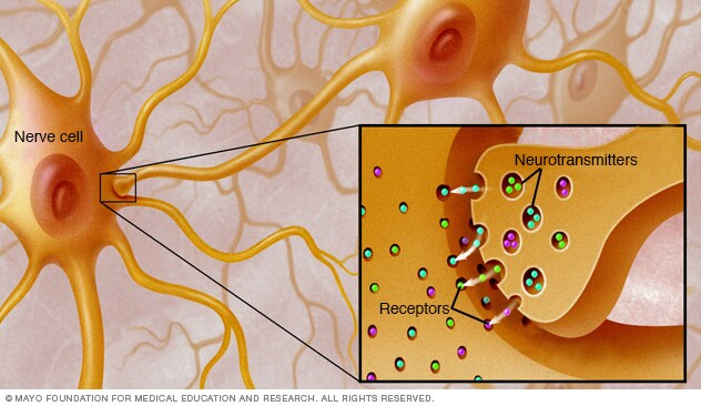 Illustration showing receptors for neurotransmitters