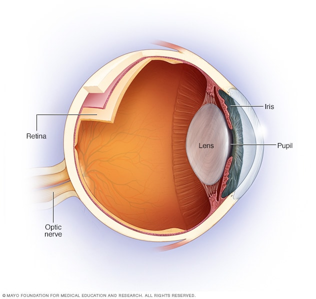 Illustration showing optic nerve