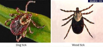 Photographs of dog tick, wood tick