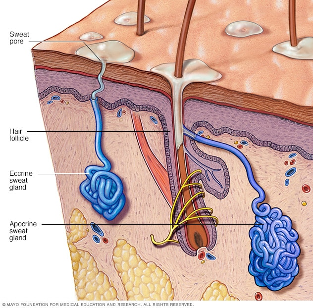 Image showing sweat glands