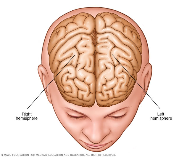 Illustration showing brain hemispheres