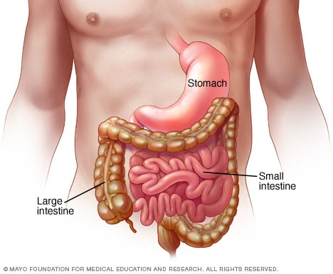 Illustration of stomach and intestines