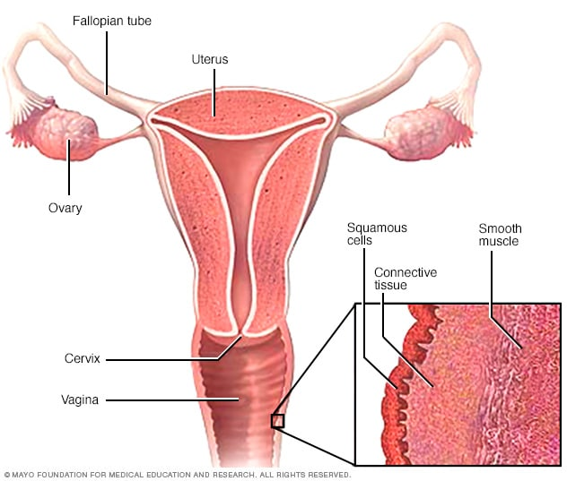 Illustration showing layers of vaginal tissue