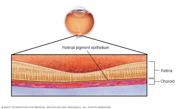 Illustration showing retina cross section
