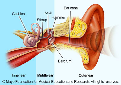 Illustration showing inner ear, middle ear and outer ear