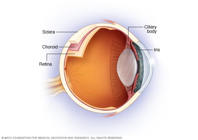 Illustration of the uvea where uveitis occurs