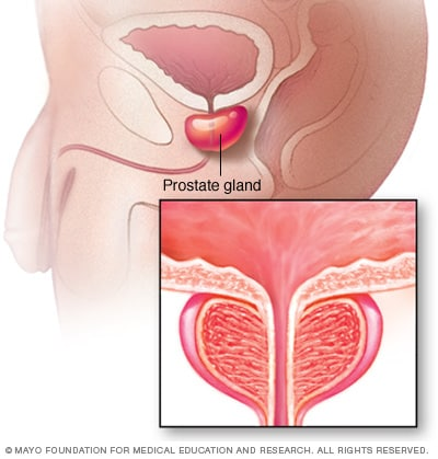 Illustration of prostate gland