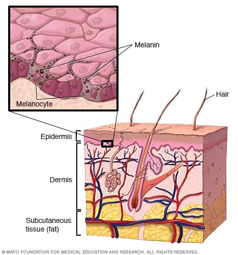 Illustration of the layers of your skin