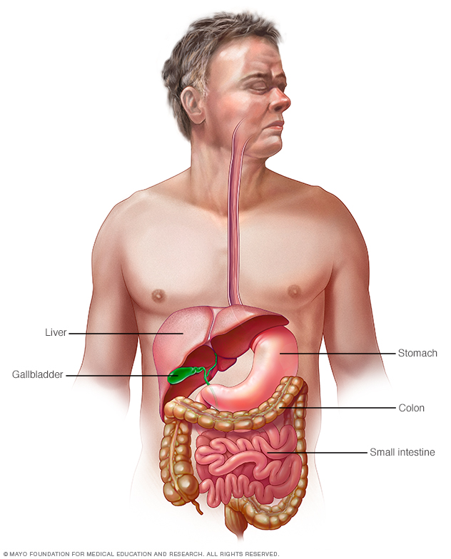 Illustration of the gastrointestinal tract