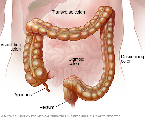Illustration showing colon and rectum