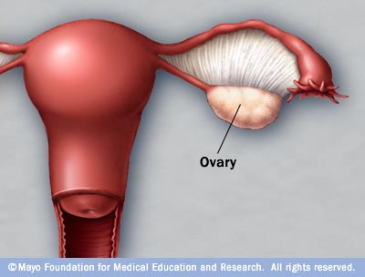 Illustration of a normal ovary