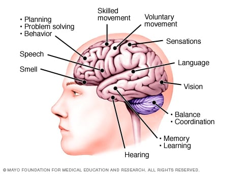 Illustration of functions of the brain