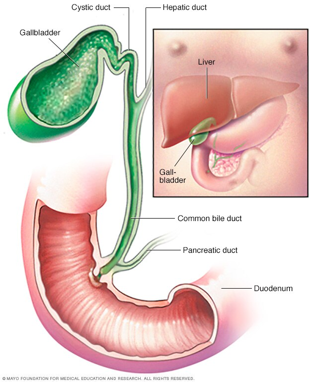 Image showing gallbladder and bile duct
