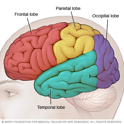 Illustration of lobes in the brain