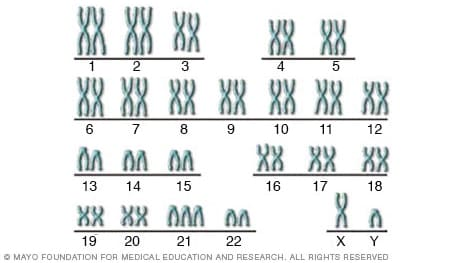 Illustration of the human chromosomes