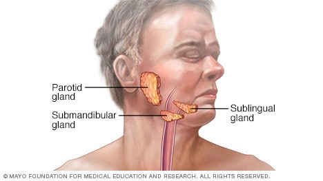 Illustration of mouth and salivary glands