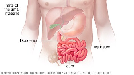 Illustration of small intestine