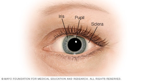 Illustration of the pupil, iris and sclera