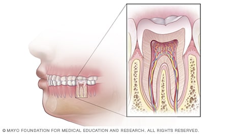 Illustration of healthy teeth